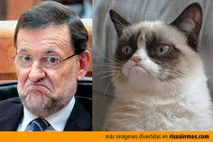 Grumpy Rajoy. Parecidos razonables: Mariano Rajoy y Grumpy cat.
