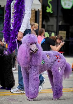 Purple poodle by JennRation Design, via Flickr   WOW!