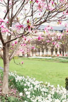 Spring in Jardin du Palais Royal, Paris