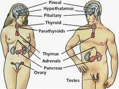 Energy Medicine Tips For Adrenal Fatigue