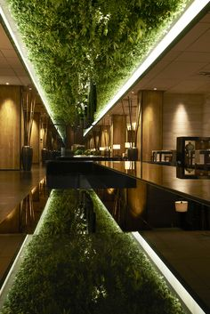 A strip of hanging plants reflected from below and accented by bright white strip lighting at Green Belt Lounge