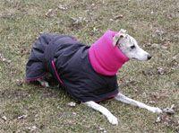 Warm Dog! Cute dog coat!