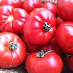 Tomatoes fresh out of the garden and to the table, sweet summertime