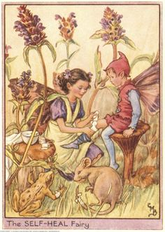 Illustration for the Self-Heal Fairy from Flower Fairies of the Wayside. A girl fairy, wearing an apron, kneels down to bandage the knee of a boy who is seated on  toadstool.    Author / Illustrator  Cicely Mary Barker