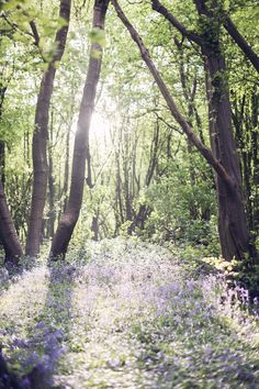 Bluebell woods - I remember walking through the woods in the Spring looking for mushrooms and there were always a lot of bluebells