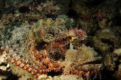 Fauna a flóra Rudého moře