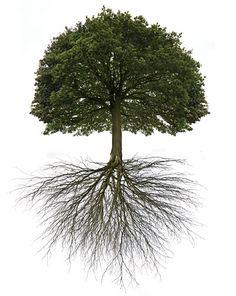 Οι αρχές της φυτικής ανάπτυξης & τα bonsai