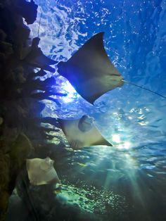 aquarium in nola :)