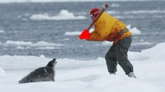 Save seals. End Canada's commercial seal hunt