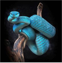 ummm, beautiful blue snake!!
