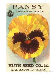 3dRose Geranium Mixed Colors Huth Seed Company San Antonia Texas Towel 15 x 22
