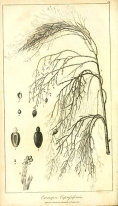 1 - Voyage in search of La Pérouse : - Biodiversity Heritage Library