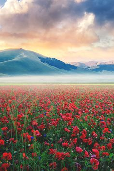 Castelluccio, Italy. Want more photos of Amazing places from around the world? follow Clara ♥ ballet's board 'Amazing places.'