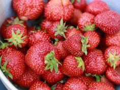 Erdbeeren: Das neue Superfood