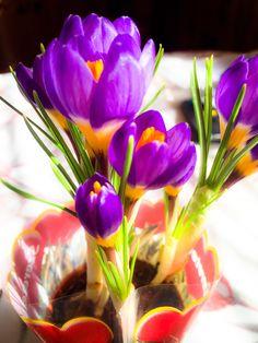 Cserepes virág - Amatőr fotók Iphone 6, Plants, Blog, Blogging, Plant, Planets