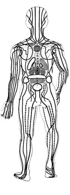 Meridianos principales de la parte posterior del cuerpo