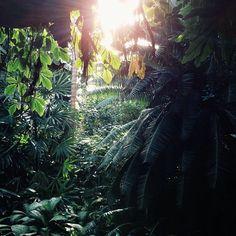Mini jungle at the Brooklyn Botanic Gardens #greenhouse #brooklyn #green #light #vscocam #vsco