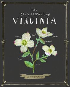 Virginia State Flower Print The Dogwood by Tigersheepfriends