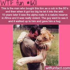 That's crazy. If I ever did that I have a feeling the lion wouldn't react the same. Lol