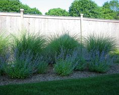 Photo: Landscape Plantings - Foreground - Nepeta Walkers Low, Background - Maiden Grass - Dix Hills, Long Island NY