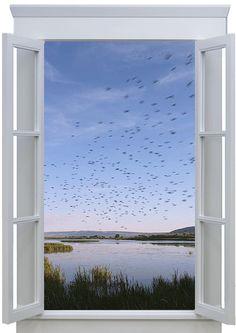 #Trompe l'oeil Window