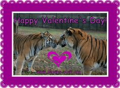 Happy Valentine's Day from Charlie's Angels, Suki & Sheila! www.noahs-ark.org