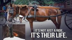Petition · BAN Beach-front horse carriage rides in Limassol · Change.org