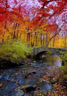 Autumn Bridge, Chicago, Illinois