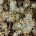Stuffed Mushrooms (Olive Garden Copycat)