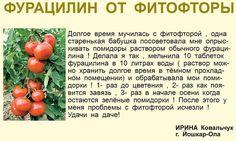 Совет для томатов