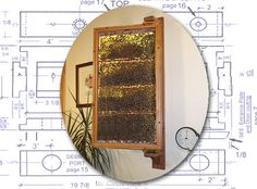 The Swingview observation hive, Bonterra Bees indoor observation bee hive, SwingView hive Model