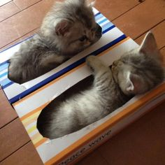 Kittens cutest - Cats - Baby animals - Cats and kittens - Cute cats - Cute animals - Share wit, Cute Cats And Kittens, I Love Cats, Crazy Cats, Kittens Cutest, Kitty Cats, Kittens Playing, Animals And Pets, Baby Animals, Funny Animals
