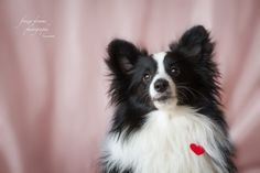 animal photography from frozendreamsphotography take a look at the valentines day pictures on boredpanda Valentines Day Pictures, Dog Portraits, Bored Panda, Animal Photography, Dogs, Animals, Inspiration, Fotografia, Biblical Inspiration