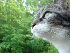淡々とかっこいい猫の画像を貼るスレ:ハムスター速報                                                                                                                                                                                 もっと見る