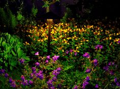 Shop VOLT's Path & Area Lighting to show off your landscaping Patio Lighting, Landscape Lighting, Curb Appeal, Paths, Landscaping, Backyard, Shop, Patio, Yard Landscaping