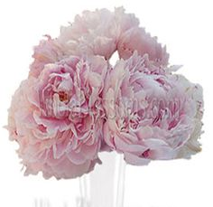 Pink Wedding Flowers - 20 for $169.99, 30 for $219.99, 60 for $275.99, 100 for $387.99