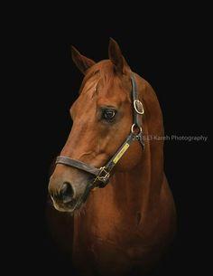 Akhal Teke, All The Pretty Horses, Thoroughbred, Horse Stuff, Horse Racing, Sport, Life, Animals, Horses