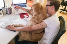 The CEO of Pinterest is really a Golden Retriever