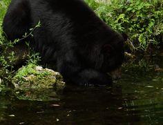 Whats for dinner bear?