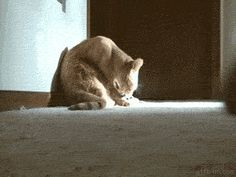 Ok, i will groom you as well You've reached the ultimate funny animal GIFs Tumblr. Proceed to following.