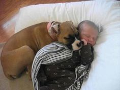 boxer and baby. This reminds me of the puppies with kennadie! So glad they love her as much as she loves them!