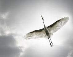 Uç Güzel Kuş Uç  CANLILARDAN KARELER