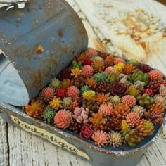 Tin #planter #succulents