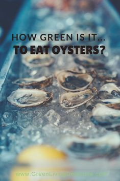 Once suffering from severe over-harvesting, oysters are bouncing back. Besides being tasty, oysters are actually good for you. But what is their impact on the environment? And is there a difference between wild and commercially farmed oysters? Follow the link to find out the truth about oysters! >>>> #oysters #shellfish #sustainablefood #saveouroceans #oceanlife #food #sustainability #healthyeating #partyfood #greenliving Sustainable Food, Sustainable Living, Benefits Of Organic Food, Save Our Oceans, Green Products, Fancy Words, Organic Lifestyle, Organic Living, Eco Friendly House