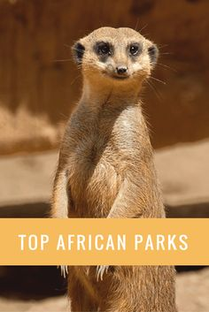 10 popular wildlife parks in Africa for the ultimate safari adventures.