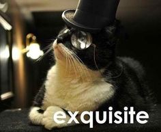 Like a cat sir!