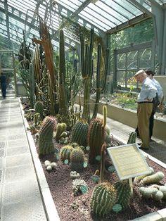 Cáctus y plantas de María: Invernadero del Real Jardín Botánico de Madrid (1ª parte) - Sección desértica