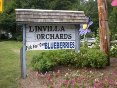 brookhaven pa photos | LINVILLA ORCHARDS, MEDIA, PENNSYLVANIA (Brookhaven, PA)