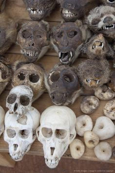Monkey and rodent skulls on local market where animal bones, skin and body parts are used in voodoo rituals, Lome, Togo, Africa