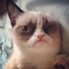 Tardar Sauce, aka the Grumpy Cat, has become an Internet sensation. Here are the best Grumpy Cat meme moments. Gato Grumpy, Funny Grumpy Cat Memes, Funny Cats, Funny Animals, Funny Memes, Cute Animals, Grumpy Kitty, Funniest Animals, Hilarious Jokes